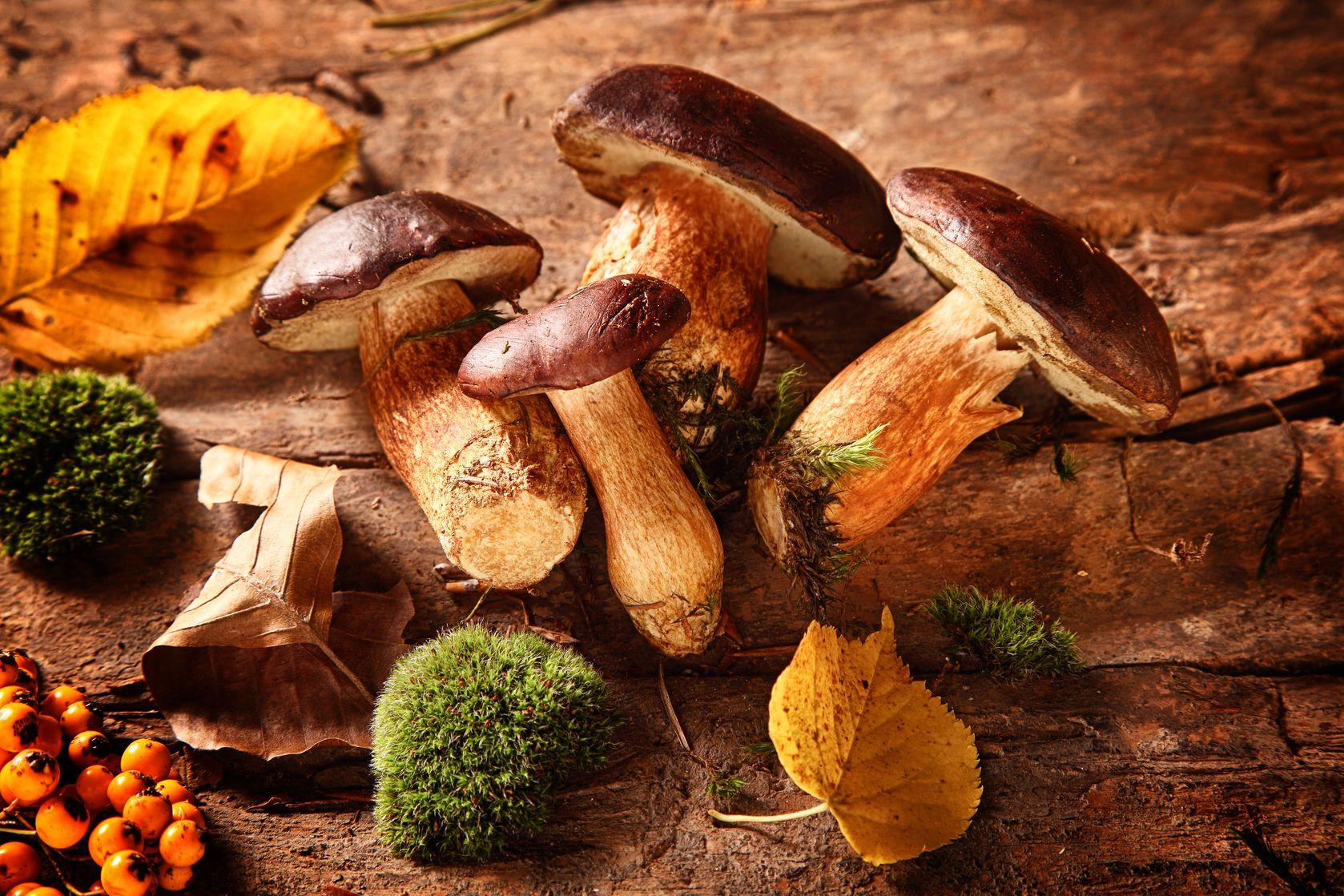 Cerstve-lesni-houby | foodandmore/123RF.com
