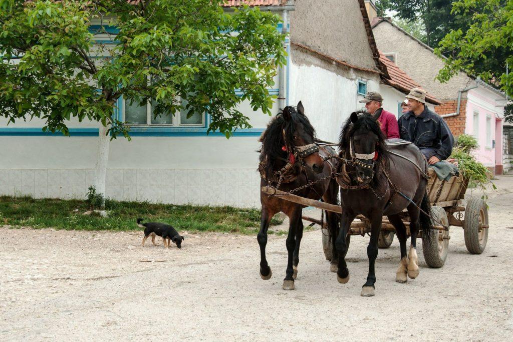 Svatá Helena - lidé vracející se z polí s koňským povozem | miropink/123RF.com
