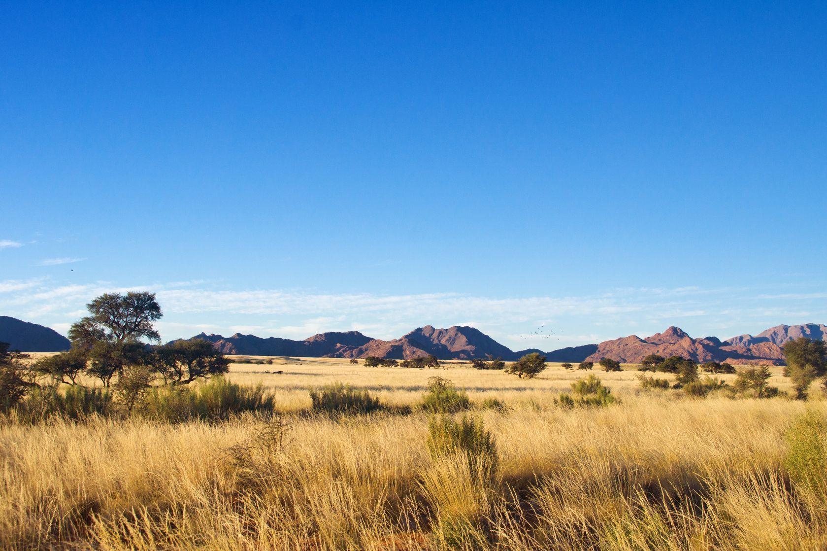 Africká savana na jihu Afriky | jaysi/123RF.com