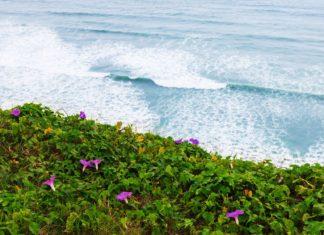 Květiny na pobřeží Tichého oceánu | terex/123RF.com