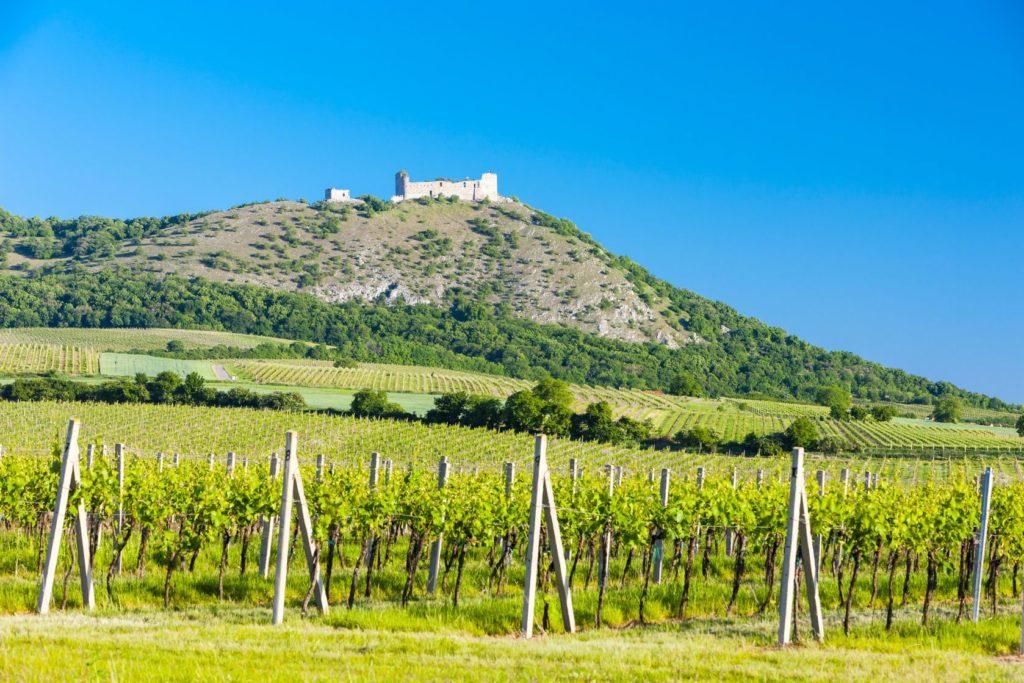 Zřícenina hradu Děvičky s vinicemi | phbcz/123RF.com