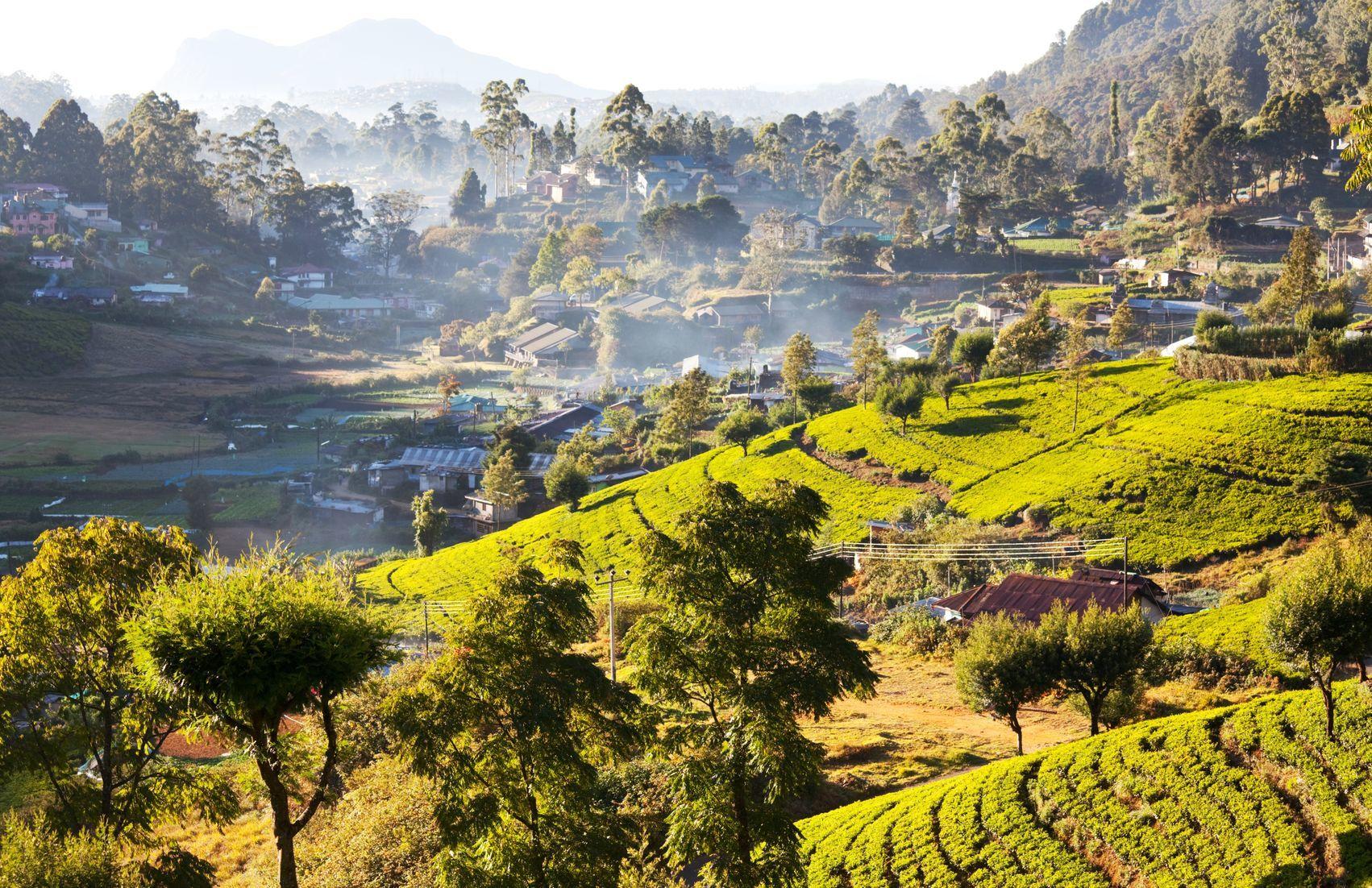 Krajina na Srí Lance | kamchatka/123RF.com