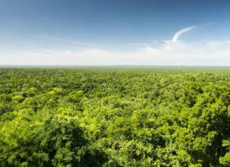 Pohled shora na džungli na Yucatánu v Mexiku | tommasolizzul/123RF.com