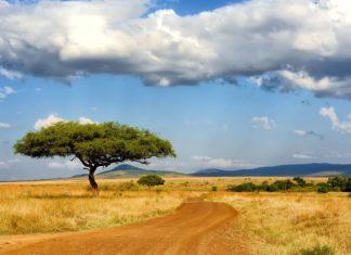 Africká krajina | byrdyak/123RF.com