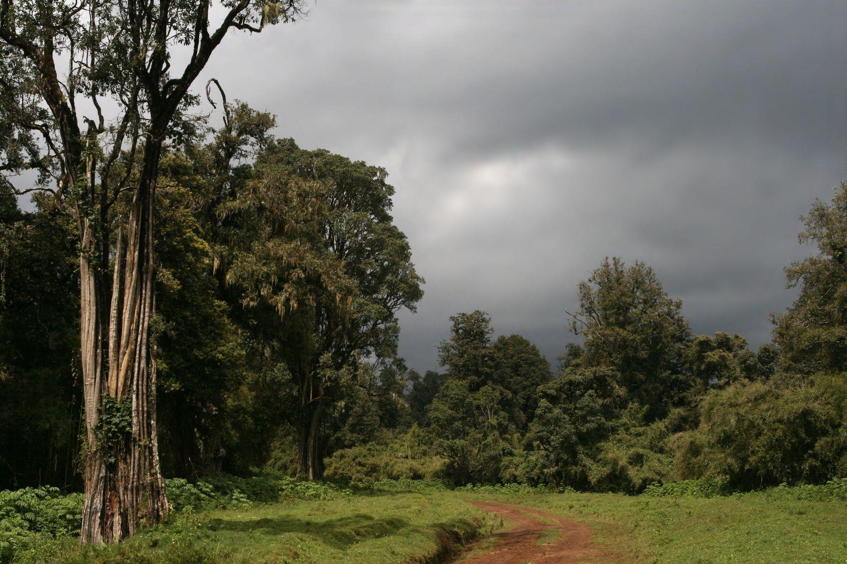 Národní park Mount Kenya | jkfoto/123RF.com