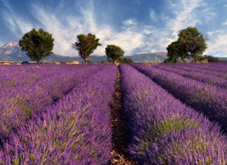 Levandulové pole v Provence | akarelias/123RF.com