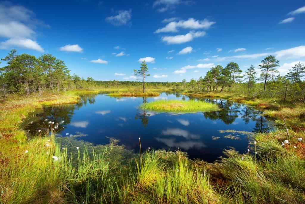 Národní park Lahemaa v Estonsku | candy18/123RF.com