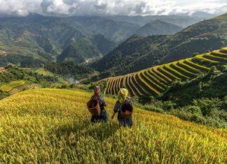 Zemědělci na Vietnamu | zintiara/123RF.com