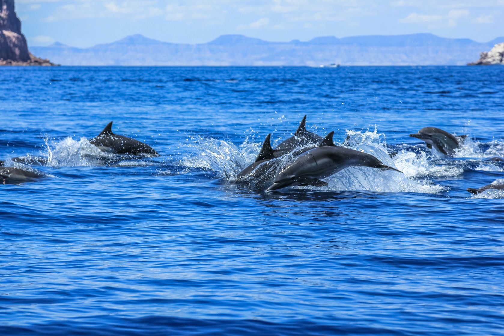 Delfíni u Mexika | bennymarty/123RF.com