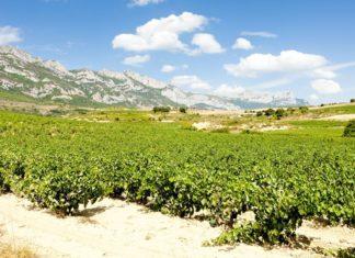 Španělské vinice | phbcz/123RF.com