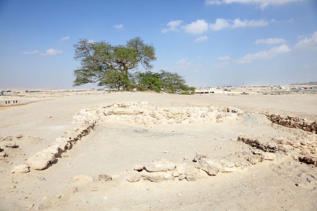 Strom života v poušti Bahrajnu | philipus/123RF.com