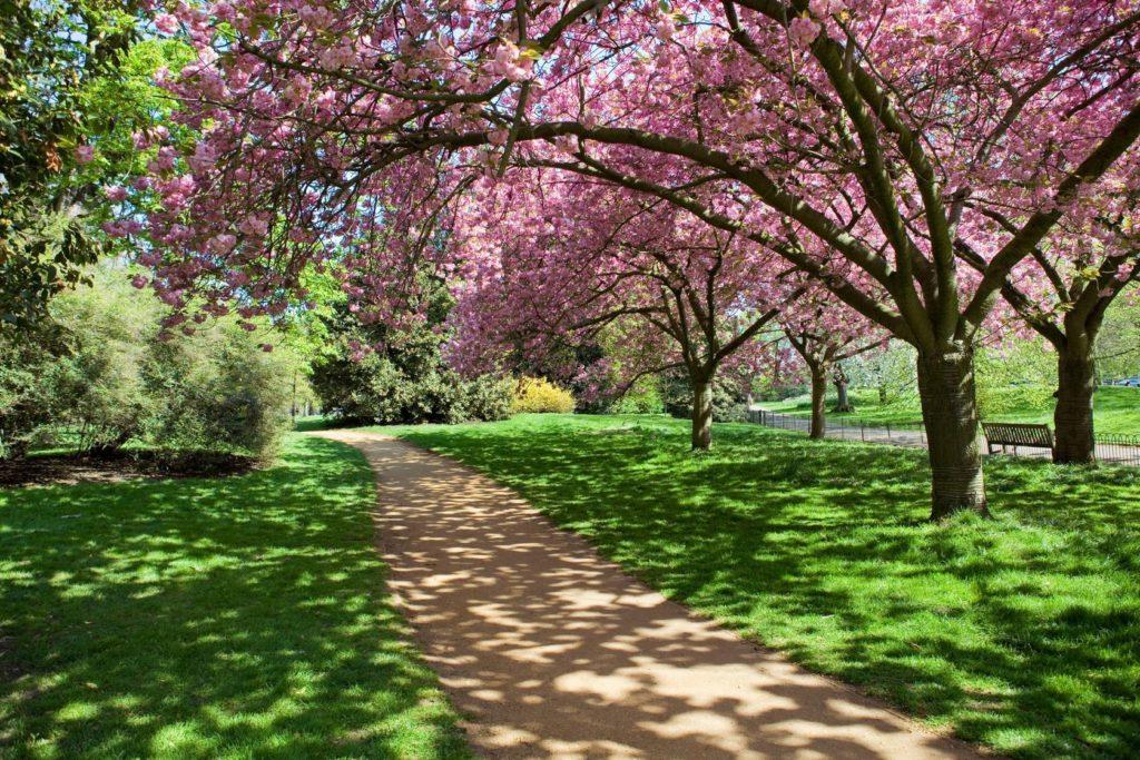 Stromy v Hyde Parku v Londýně | ruivalesousa/123RF.com