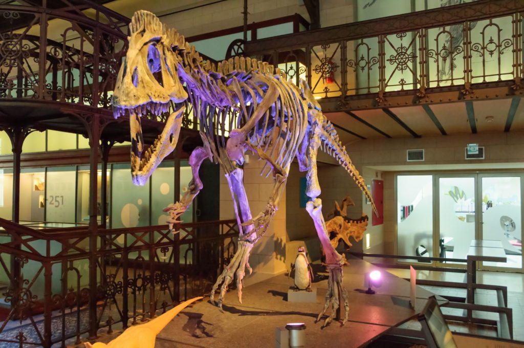 Kostra dinosaura v Muzeu přírodních věd v Bruselu | andrcgs/123RF.com