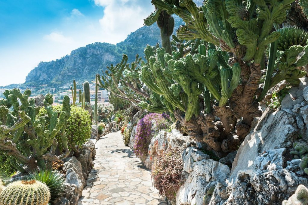 Jardin Exotique ve čtvrti Moneghetti v Monaku | coffeecocolate/123RF.com