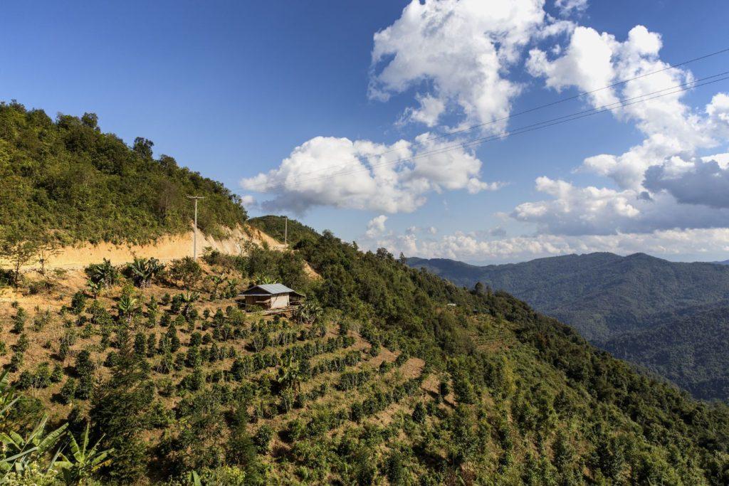 Čajová plantáž v provincii Phongsaly v Laosu | takawildcats/123RF.com