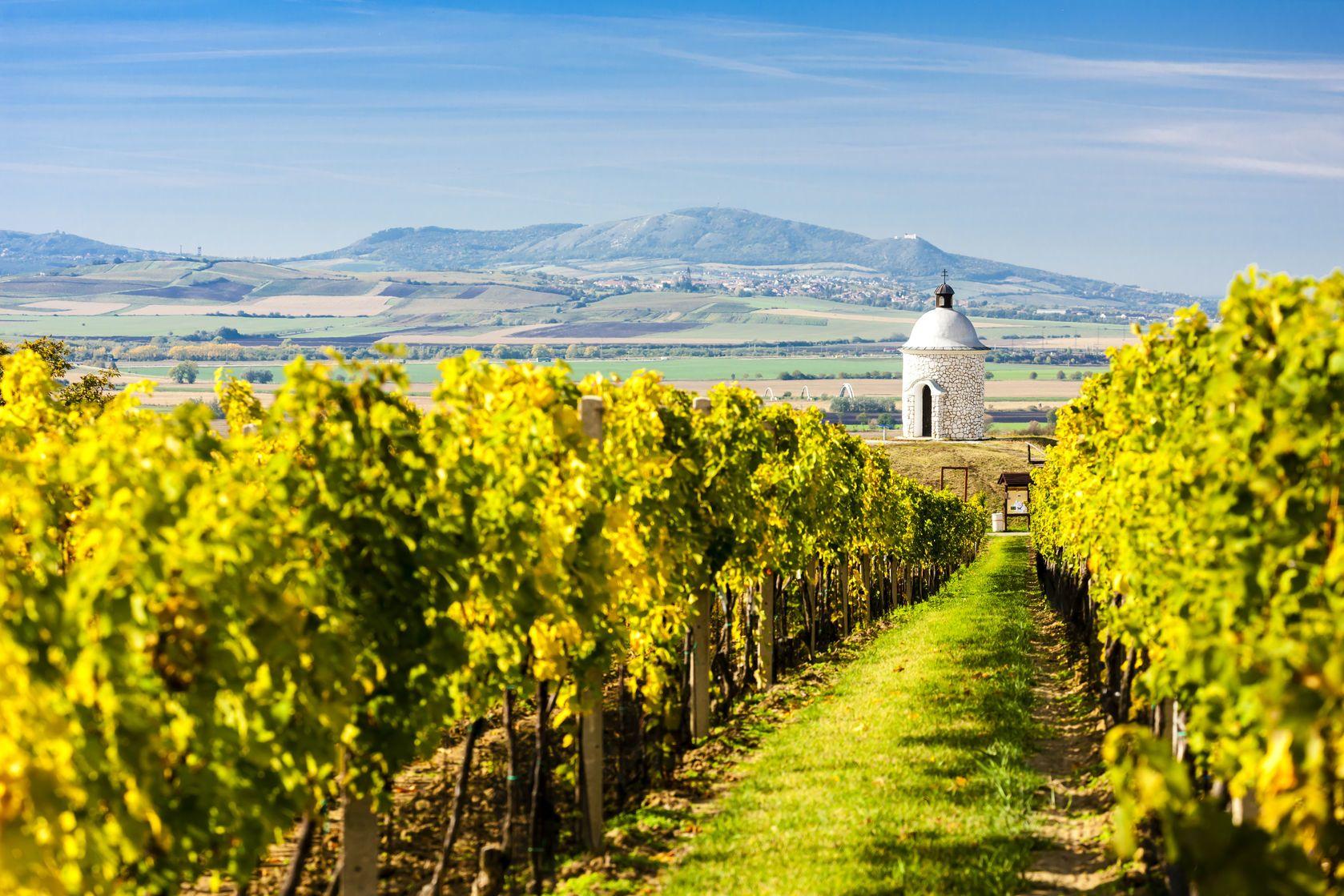 Kaple s vinicí v blízkosti Velkých Bílovic v České republice | phbcz/123RF.com