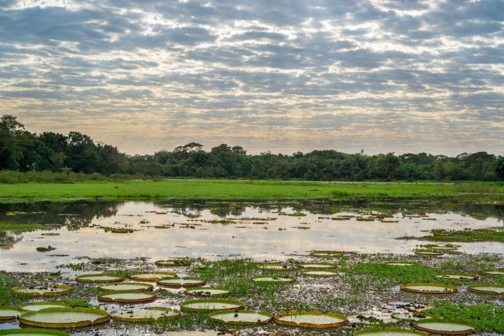 Národní park Pantanal Matogrossense v Brazílii   saaaaa/123RF.com