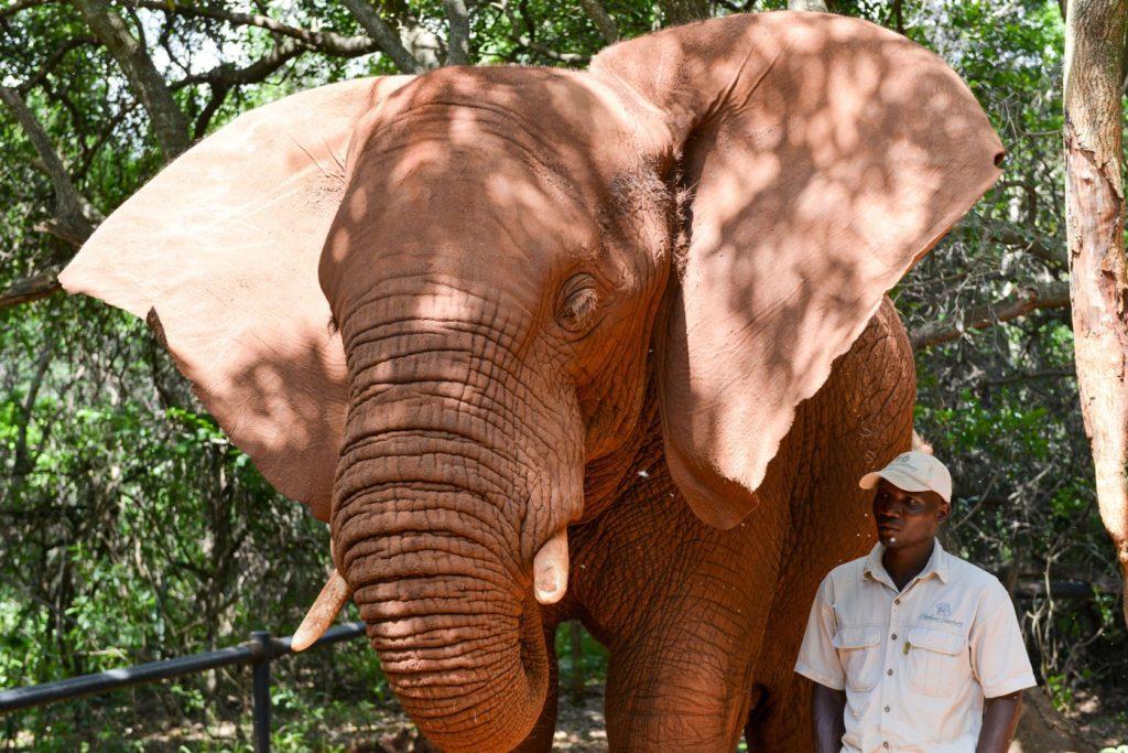 Slon v Elephant Sanctuary v Hartbeespoort v Jihoafrické republice | demerzel21/123RF.com