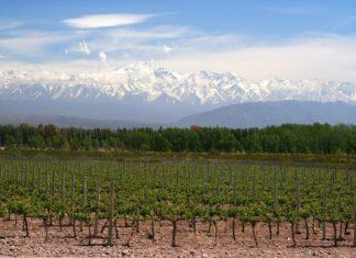 Vinice a horská krajina v Argentině | aaabbbccc/123RF.com